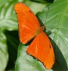 Orange mécanique - herve barriere