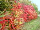 Rouge d'automne - robert buatois