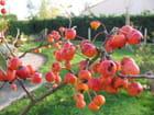 Petits fruits d'automne .. par Jocelyne THOMAS-B sur L'Internaute