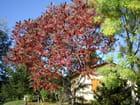 Couleurs automne - Marie-hélène PAGEAUD