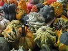 Fruits d'automne par Maria FINGERCWEIG sur L'Internaute