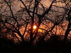Coucher de soleil au fond des bois - Laurent BELOIN