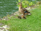 Col vert en famille - LILIANE VEYS