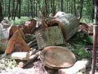 Coupe de bois par Lucie FOUIN sur L'Internaute