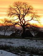 Soleil d'hiver sur la campagne - Jean-Jacques CORDIER
