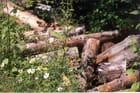 Renaissance de la forêt - Gilbert EMO-KLAINE