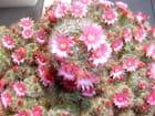 Fleur de mai - philippe santiago