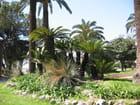 Jardins du casino - Jean-pierre MARRO