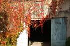 Couleurs automne - Lucien DORLET
