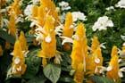 Cornets de vanille chantilly - jacqueline joly