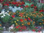 Parterre de fleurs - Claude GARNIER
