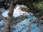 Pins sur la mer - Maurice DAUMAS