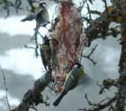Oiseaux d'hiver -