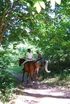 à cheval en forêt