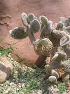 A dada sur mon cactus ! Aïe !!