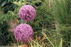 A fleurs d'Aulx