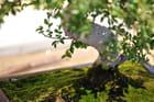 À l'ombre d'un bonsaï