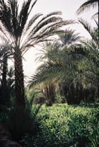 A l'ombre des palmiers