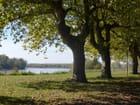 A l'ombre près de la Garonne