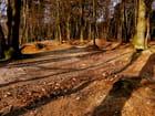 A l'orée de la forêt