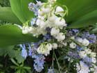 A la St Anselme,dernières fleurs sème