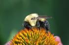 abeille et papillon dans mon jardin
