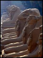 Allée de Sphinx