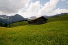 Alpage en fleur dans les Alpes