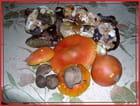 Amanite oronge,ceps noirs