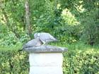 Amours de pigeons