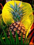 Ananas en composition florale