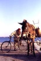 Ane à la charrue