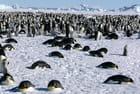 Antarctique, Mer de Weddell