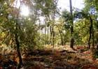 Après la pluie... la forêt..