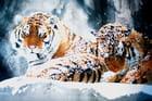 Aquarelle les tigres sous la neige