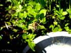 Araignée au soleil