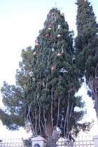 arbre de Noël en Palestine