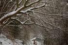 arbre et la neige