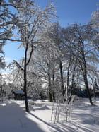 Arbres chargés de neige