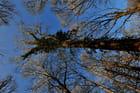 arbres en contre-plongée
