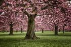 Arbres en fleur - Parc de Sceaux