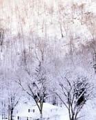 Arbres en neige