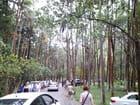 Arbres,Forêt,Sous bois (1)