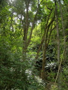Arbres,Forêt,Sous bois (6)