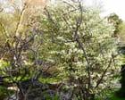 arbres printaniers