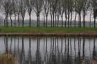 arbres -refets