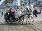Attelage à Dunkerque