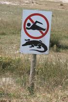 Attention aux crocos!