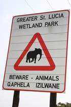 Attention présence d'éléphant