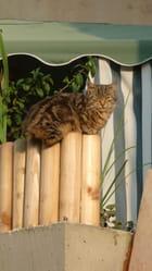 au balcon, je me dore au soleil
